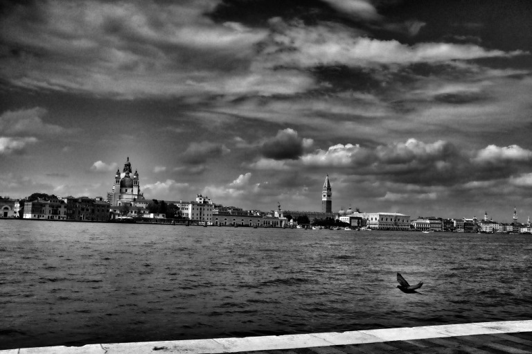 The Pigeon of Venice
